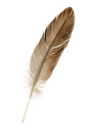 piuma bianca: Feather penna. Isolato su uno sfondo bianco. Archivio Fotografico