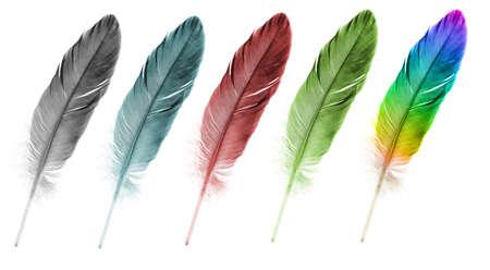 pluma blanca: Pluma de la pluma conjunto de colores abstractos. Aislado en un fondo blanco.