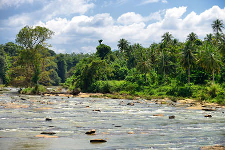 Tropical river. The river flowing in the country of Sri Lanka Stock Photo - 16596781