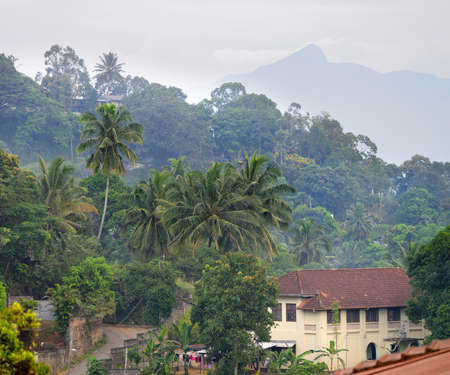 House in the jungle. Country Of Sri Lanka Stock Photo - 17230848