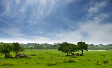 Pasture in the jungle. Country Of Sri Lanka Stock Photo - 17230835