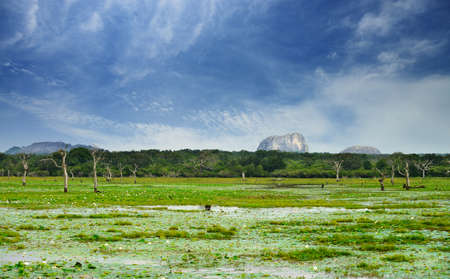 distant: Lake in the jungle and dry tree. Country Of Sri Lanka