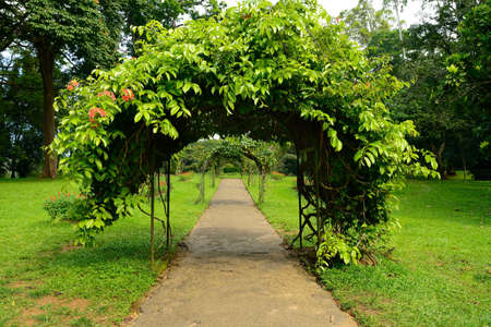 A beautiful alley in the Park with exotic plants. The national Park of Sri Lanka Stock Photo - 17335638