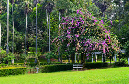 Park with exotic plants. The national Park of Sri Lanka Stock Photo - 17335636