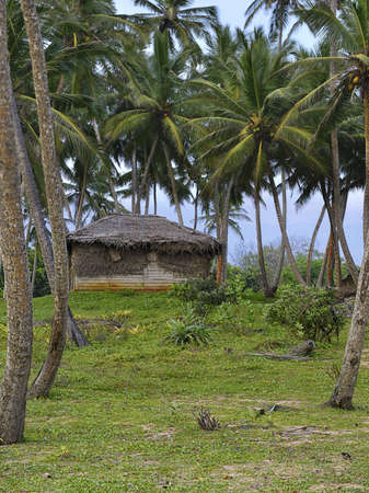 thatched house: Shack in the jungle. A wooden house with a thatched roof in a tropical forest.