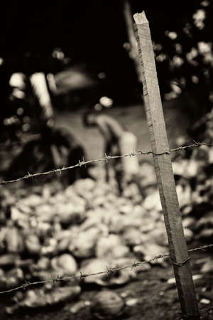 slave labor: Slavery. Monochrome toned. The men behind barbed wire are working on putting coconuts Stock Photo
