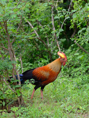 Tropical bird . A bird in the wild. The national Park of Sri Lanka photo