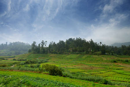 Agriculture in the tropics. The garden in the country Sri Lanka Stock Photo - 17581567