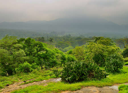 The jungle. Wild forest country Sri Lanka Stock Photo
