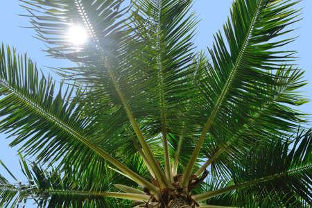 palm tree and sun light. Photo closeup control light Stock Photo - 17577158