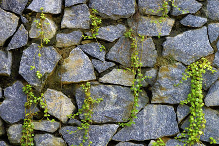 a wall of natural stone and sprouted grass