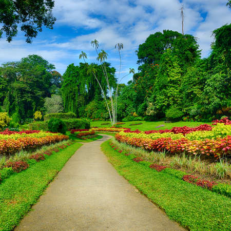 A beautiful alley in the Park with exotic plants. The national Park of Sri Lanka Stock Photo - 17581569