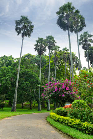 A beautiful alley in the Park with exotic plants. The national Park of Sri Lanka Stock Photo