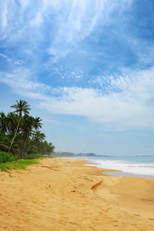 ocean coast. The coast of the Indian ocean with palm trees and yellow sand Stock Photo
