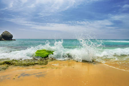 shores: Wave on the beach.Beautiful shores of the Indian ocean