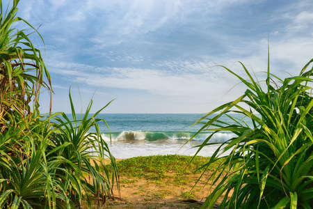 Beautiful shores of the Indian ocean view through the tropical plants
