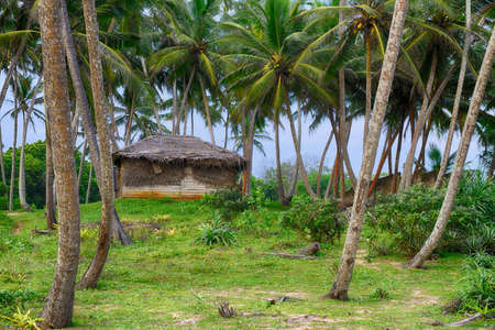 Shack in the jungle. A wooden house with a thatched roof in a tropical forest.