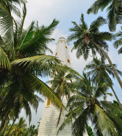 lighthouse and palm tree. Tropical climate photo
