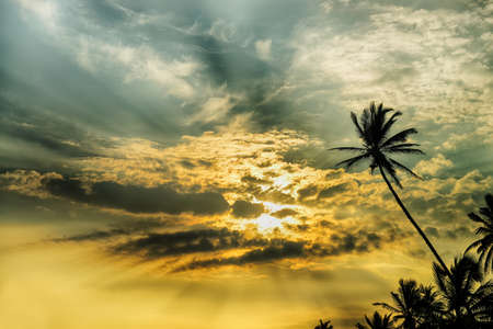 palm tree and fantastic sunset. The silhouette of palm trees on the beautiful sky