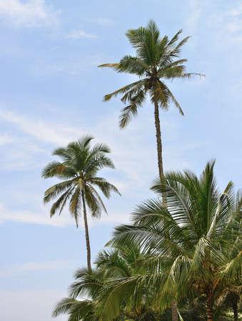 Palm tree and blue sky. Tropical island