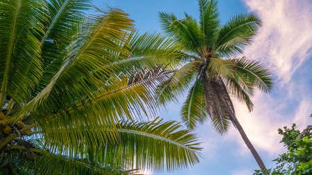 Coconat Palm on the Beach of Gam Island. Raja Ampat, Indonesia, West Papua. Stock Photo
