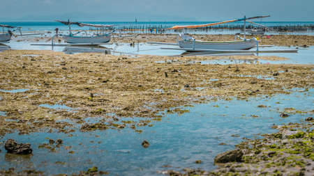 algal: Two Fisher Boats at low tide near seaweed plantations algal - Nusa Penida, Bali, Indonesia