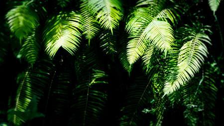 shadowed: Shadowed Fern Leaves in Rainforest, Ubud, Bali, Indonesia