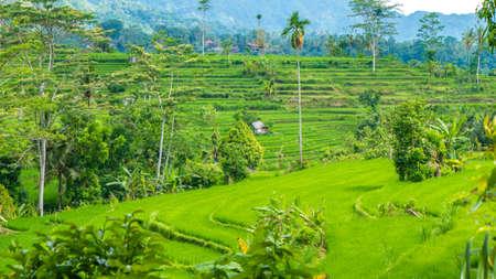 Lush green Rice tarrace in Sidemen. Bali, Indonesia Stock Photo