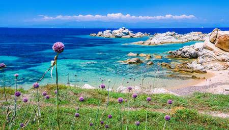 Wild onion leek growing between granite rocks on beautiful Sardinia island . Blue see and an other island on background, Sardegna, Italy