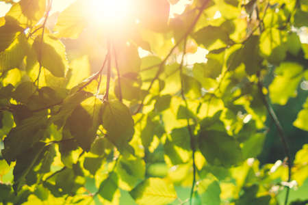 Bright green leaves on the branches in the autumn forest Stock Photo - 90036755