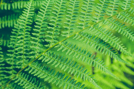 Beautyful fern leaf. Green foliage close up. Natural floral fern background