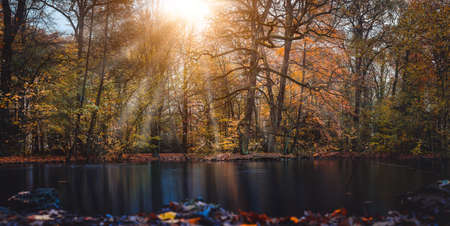 Autumn sun rays sunbeam appear trought the beautiful tree branches and leaves in a city park with a pond in the front of the picture