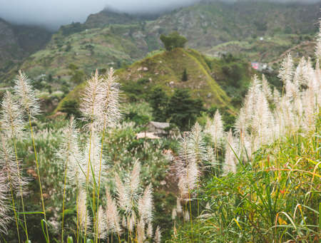 Landscape of vegetation and mountains and some local dwellings of the Paul Valley. Cultivated sugarcane, coffee and mango plants growing along valley. Santo Antao Island, Cape Verde Stockfoto