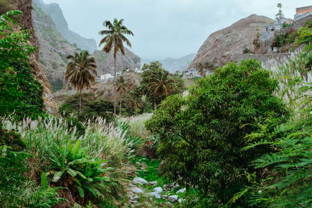 Picturesque ravine and riverbed covered with lush vegetation of banana, mango trees, sugarcane and palm trees. Paul Valley, Santo Antao Cape Verde