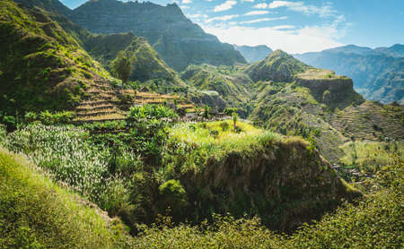 Amazing view of high mountains covered with lush green vegetation. Picturesque banana and sugarcane plantations on the trekking trail to Coculli Santo Antao Cape Verde 스톡 콘텐츠