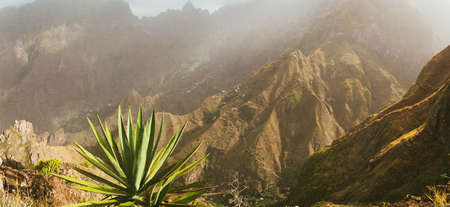 Incredible panoramic view of the steep mountain and trakking routes to green ravine. Huge agave plants in foreground in warm sunrays light. Santa Antao Island. Cape Verde Stock Photo