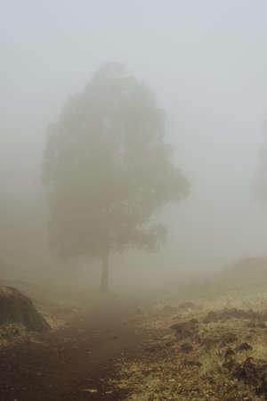 Silhouette of trees in milky fog on the bottom of cove Vulcan creator . Santo Antao. Cape Verde Stock Photo