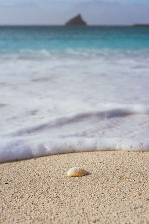 Seashell on sandy beach with white foam of rolling ocean waves. Tropical beach with azure blue water