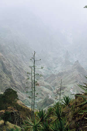 Cape Verde. Blossom yucca plants with desolate rocky mountaint background in Xo-xo valley in Santo Antao island