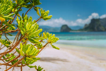Tropical green beach plants foliage at Las cabanas beach with blurred Malpacao island in background. Beautiful travel scenery in El Nido, Palawan, Philippines Stock Photo - 123541208