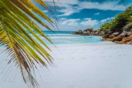 tropical La Digue Island Seychelles, white beach with granit rocks and palm tree