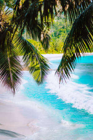 Palm tree leaves on beautiful tropical paradise Anse intendance beach. Ocean wave roll on sandy beach with coconut palm trees. Mahe, Seychelles Stock Photo