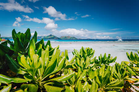 Tropical plants at famous Anse Source d'Argent beach on island La Digue in Seychelles. Praslin Island in Background. Exotic paradise travel scenery concept shot.