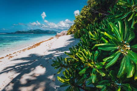 Tropical plants at famous Anse Source dArgent beach on island La Digue in Seychelles. Exotic paradise travel scenery concept shot. Stock Photo