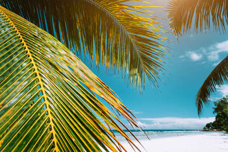 Palm tree leaves on tropical paradise beach Anse Cocos, La Digue, Seychelles. Stock Photo - 123541385