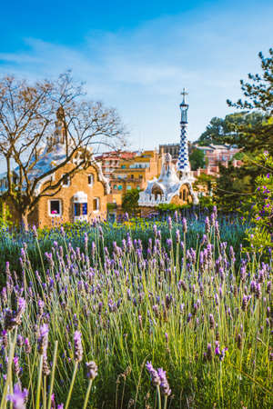 Colorful mosaic building in Park Guell. Violet lavender flower in foreground. Evening warm Sun light, Barcelona, Spain.