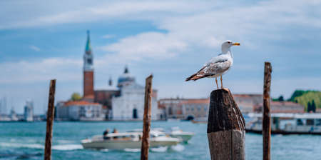 Scenic view of blurred Venice panorama of Venices embankment with seagull in front. Most popular touristic attraction, summer citytrip vacation in Italy Stok Fotoğraf