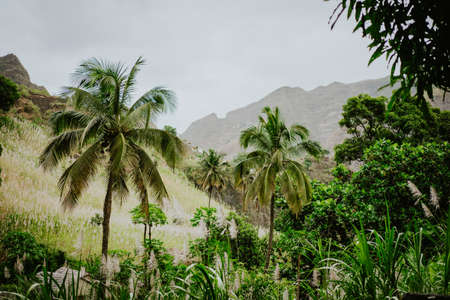 Picturesque ravine and riverbed covered with lush vegetation of banana, mango trees, sugarcane and palm trees. Paul Valley, Santo Antao Cape Verde.