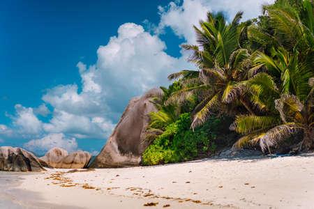 Palm tree at famous paradise Anse Source d'Argent beach at La Digue, Seychelles.