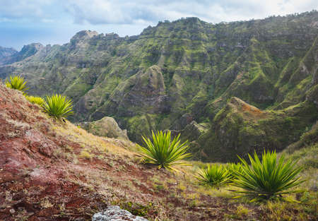 Santo Antao Island, Cape Verde. Agave plants on a steep slope with mountain slope range in the background Stock Photo